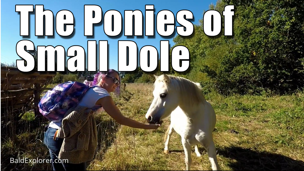 Pony Walk in Small Dole