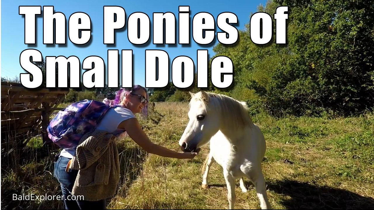 Pony Walk in Small Dole