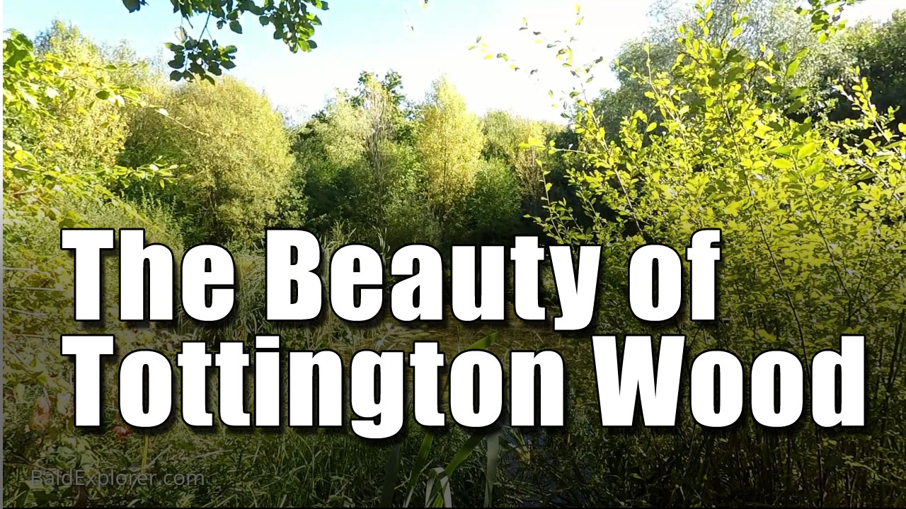 Tottington Woods