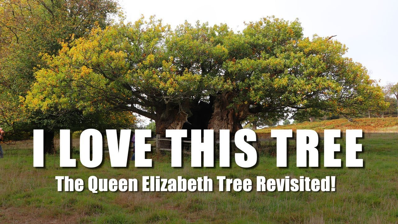 The Queen Elizabeth Tree Revisited