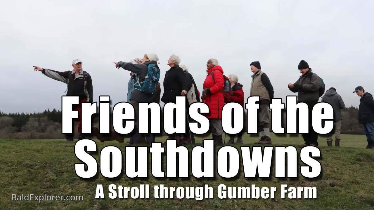 A Stroll with The Friends of the Southdowns
