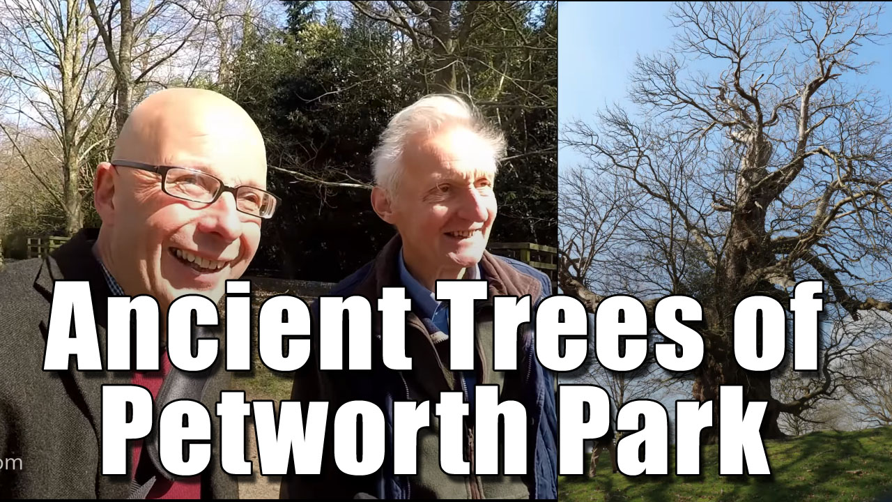 The Ancient Trees of Petworth Park