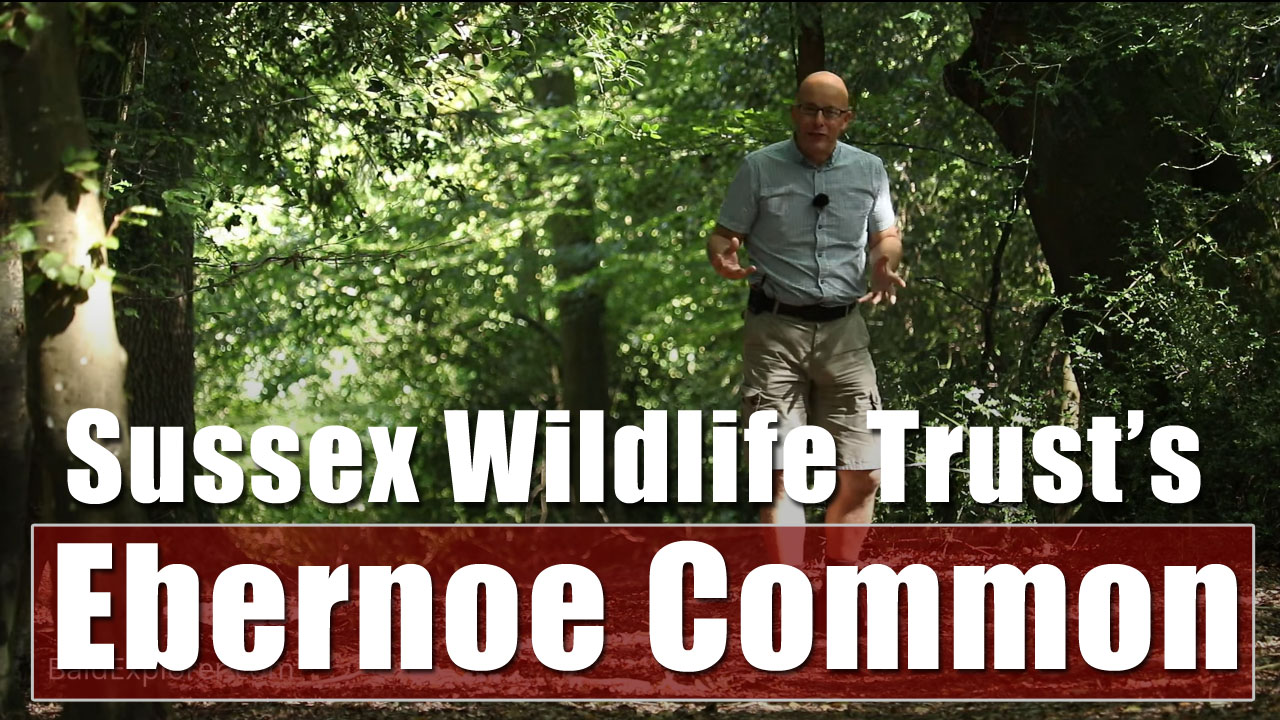 Exploring West Sussex Wildlife Trust's Ebernoe Common
