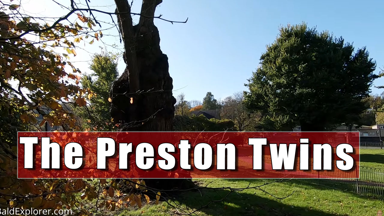 The Preston Twins - The Oldest Elm Trees in Britain.