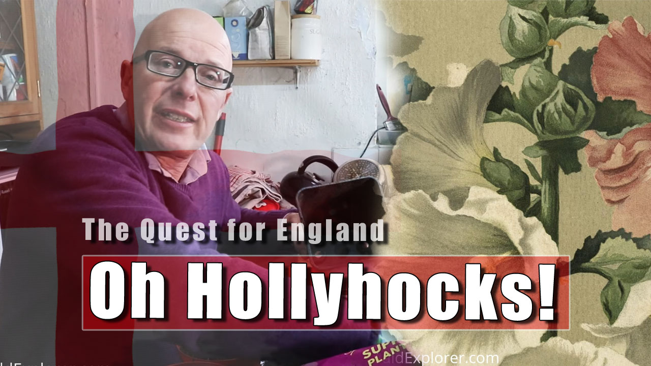The Quest for England: The Wonderous Hollyhocks