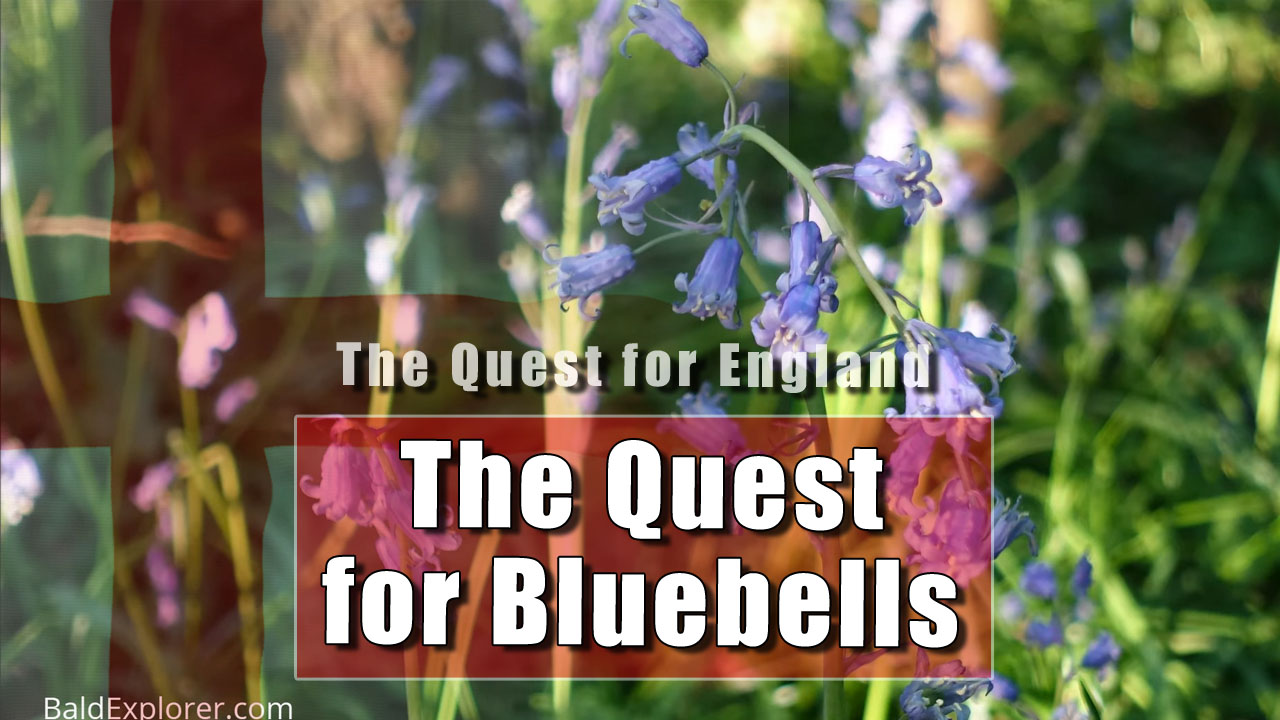 The Quest for England - The Bluebells Of Clapham