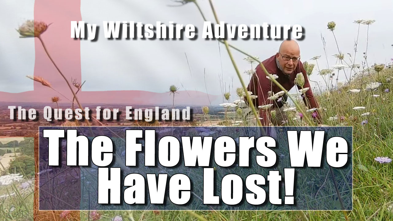 My Wiltshire Adventure - The Wild Flowers of Morgan Hill
