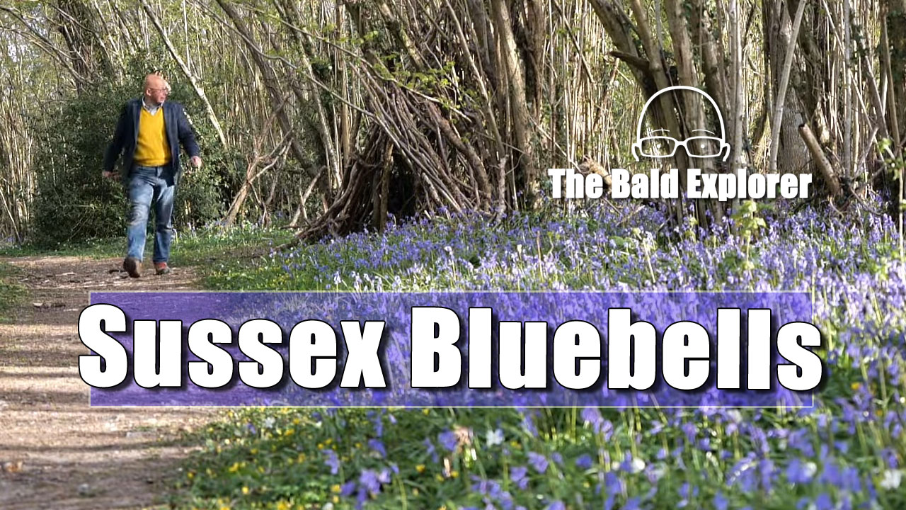 My England - In Search of Bluebells